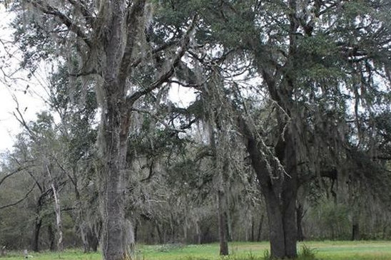 Land for Sale Florida