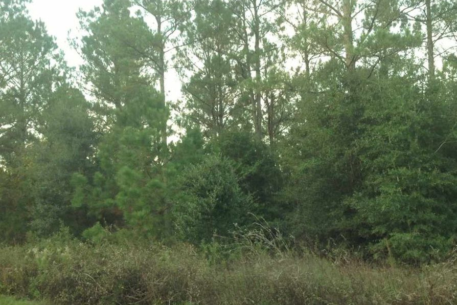 Wooded Land in Florida