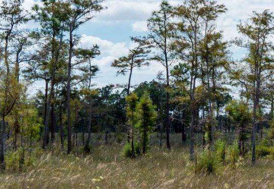 Land for Sale Jefferson County FL