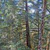 Putnam County Land for Sale