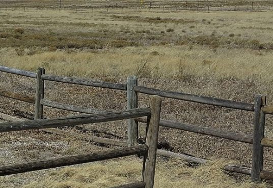 Throckmorton County Land for Sale